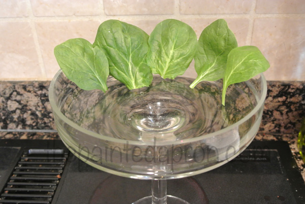 spinach lining thepaintedapron.com