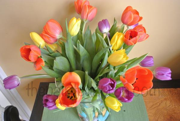 tulips! thepaintedapron.com
