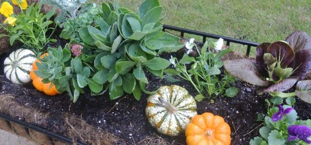cropped-pumpkins.jpg