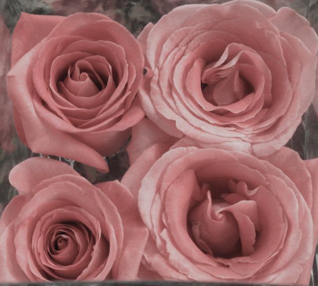 hand tint rose