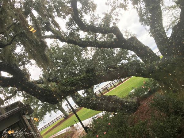 grand-hotel-tree